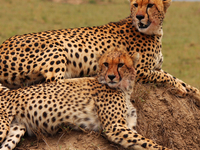 Masai Mara 3 Days Safari Package