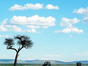 Masai Mara Safari Offers Photos