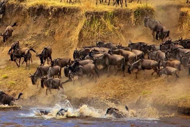 3 Days Masai Mara Wildebeest Migration Photos