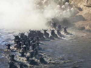 Masai Mara 3 Day Safari - Annual Wildebeest Migration Fotos