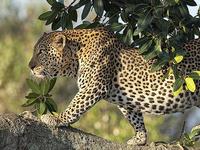 3 Days Masai Mara Budget Camping Safari