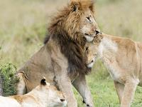 Budget Camping At Masai Mara-African Breeze Tours