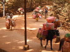 Matheran Pony Transport - Maharashtra - India