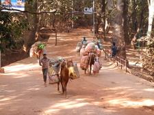 Matheran Walkways - Maharashtra - India