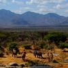 Matthews Range Safari Package
