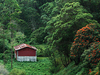 Mattupetty Forests