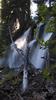 Falls Mazama