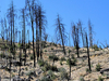 Mazatzal Wilderness - Arizona