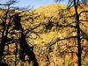 Mazatzal Wilderness - Tonto National Forest