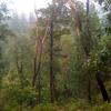 McFadden Horse Trail 146 - Tonto National Forest - Arizona - USA