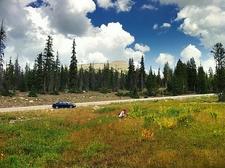 Meadow In Uintas UT