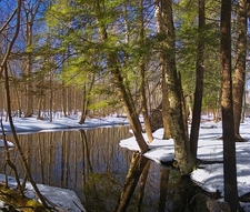 Meandering Spruce Run - Delaware State Forest - Pike County PA