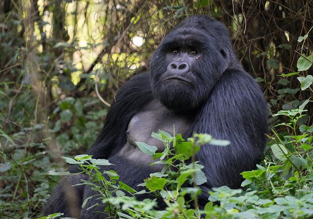 Uganda 7 Days Safari Experience Photos
