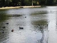 Middleton Park