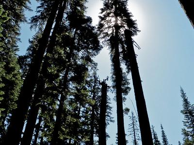 Midnight Trail 272 - Tonto National Forest - Arizona - USA