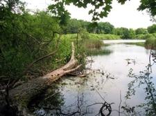 Mielno Reserve Poland