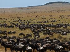 Migration Safari