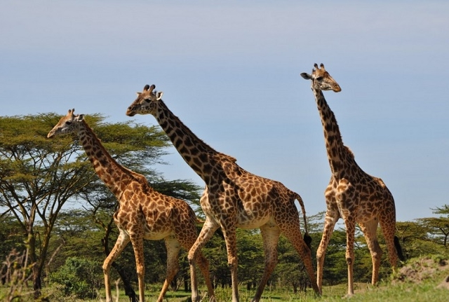 8 Days 7 Nights - Encounter the Beauty of the Southern Tanzania Photos