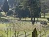 View Of Aldershot Military Cemetery