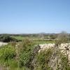 Minorcan Countryside