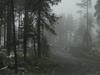 Misty Sierra Ancha Wilderness