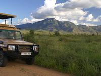 Mkomazi And Saadani National Park Safari