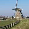 Windmill In Lisse