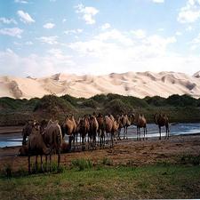 Mongolia City Parks - Gobi Gurvan Saikhan National Park