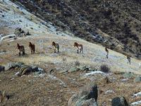 Khustain Nuruu Parque Nacional
