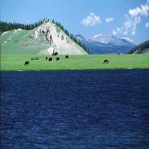 Mongolia Wildlife  - Gun- Galuut Nature Reserve