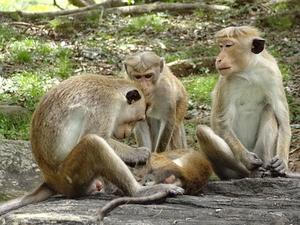 The Monkey Kingdom Tour Fotos