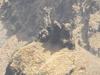 Monkey Point Close-up - Mahabaleshwar - Maharashtra - India
