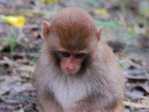 Sajnekhali Santuario de Vida Silvestre