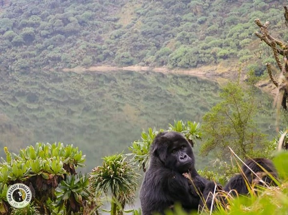 Be the First to Visit Virunga National Park in 2019 Photos