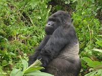 5 Days Gorilla Tour and Wildlife Safari Uganda
