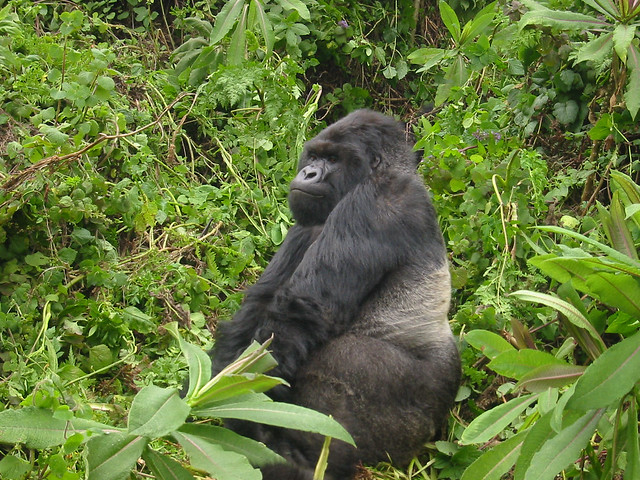 5 Days Gorilla Tour and Wildlife Safari Uganda Photos