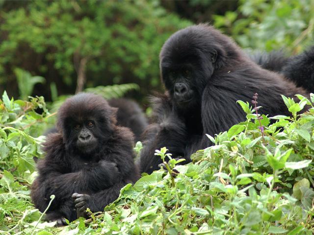 DR Congo & Rwanda Tour Photos