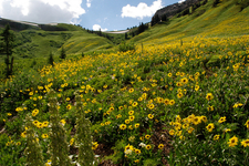 Mount Bannon - Grand Tetons - Wyoming - USA