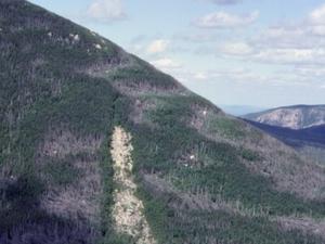 Monte Coe