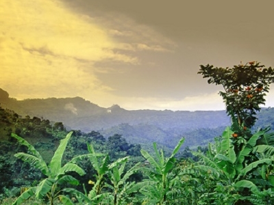 Mount Elgon National Park Overview