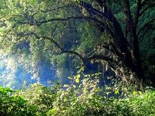 Mount Elgon National Park UG & KE