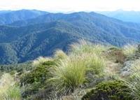 Monte Hikurangi