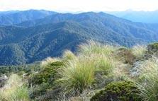 Mount Hikurangi