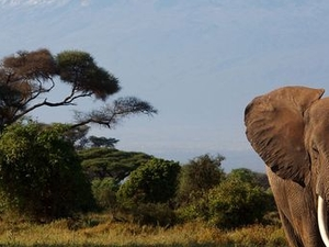 Climbing Mount Kilimanjaro Package Machame Route Photos