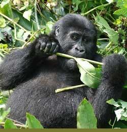 Mpungu Tours & Travel - Uganda