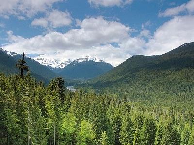 Mt. Rainier National Park WA