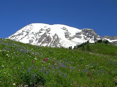 Mt. Rainier NP Wildflower Meadow WA