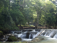 Matorral Lek Arboretum