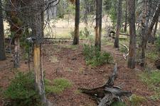 Mud Volcano Loop Nature Trail - Yellowstone - Wyoming - USA