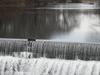 Mumford River Falls Caprons Pond